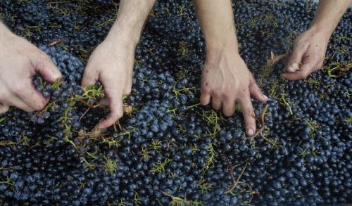 La degustazione: Degustare i vini rossi giovani