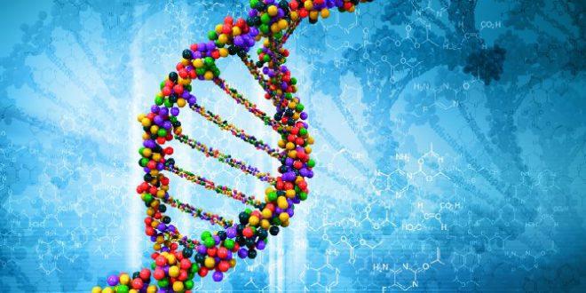 Alzheimer, un gene ne previene la comparsa