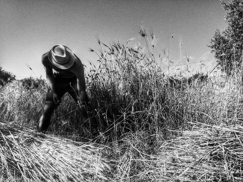 Mulino Maggio: gli antichi grani del Salento