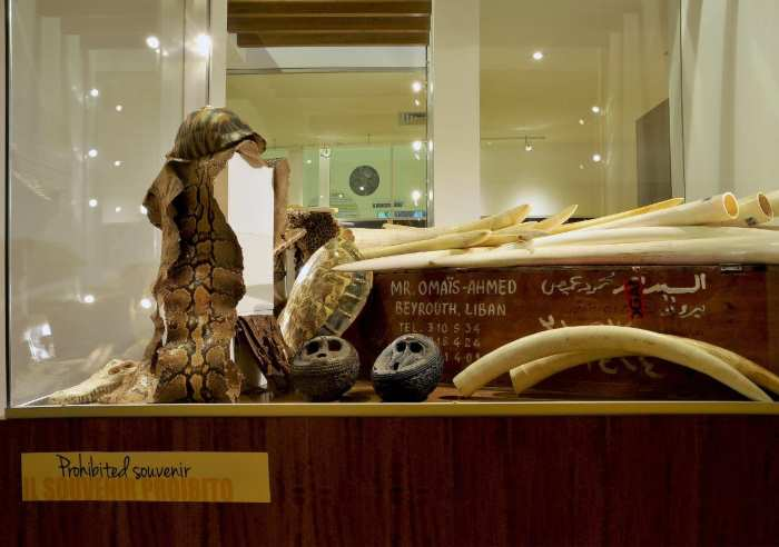 Rinnovato il Museo Ambiente e Crimine al Bioparco di Roma