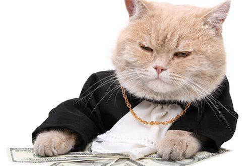 Quando la ricchezza è amore – Animals Economists