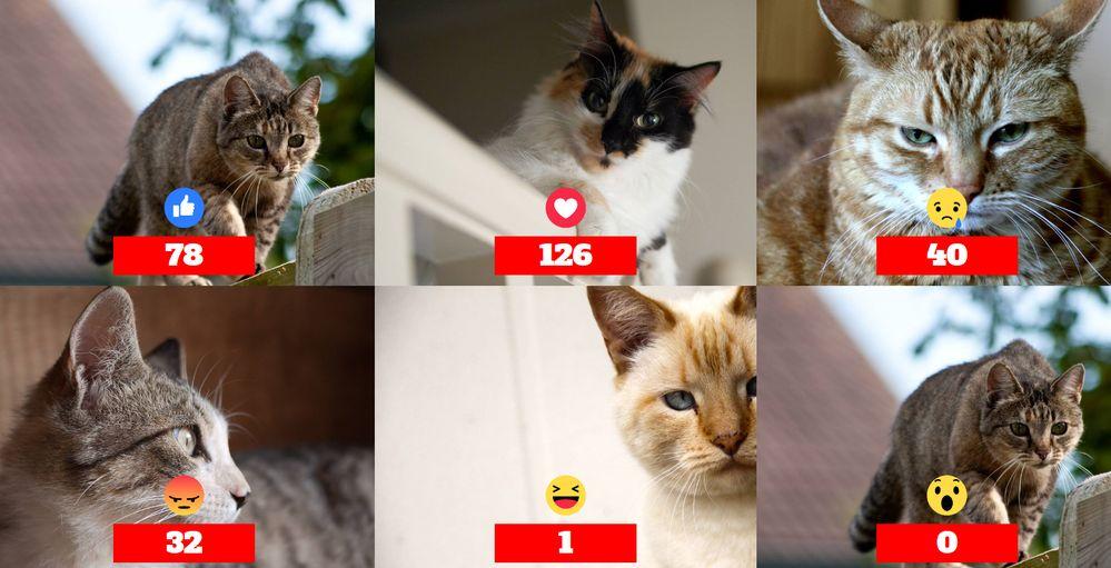 Come realizzare un sondaggio in diretta live con le emoji di Facebook!