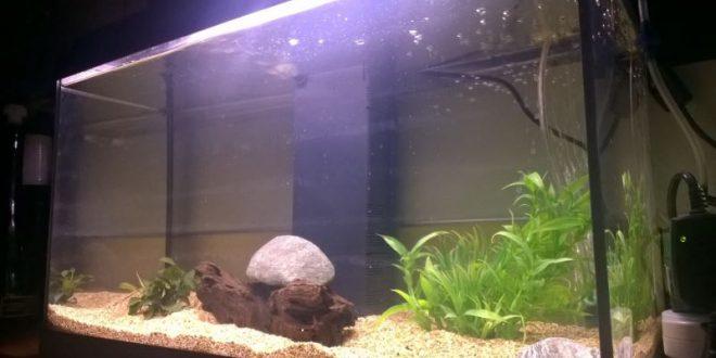 Il sistema di filtrazione per acquario