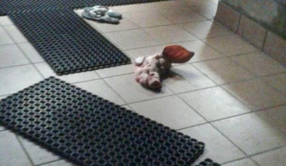 Monfalcone, testa di maiale davanti al Centro islamico