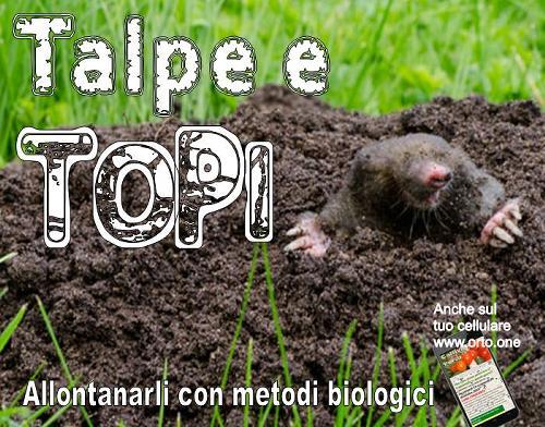 Allontanare topi e talpe con repellenti naturali