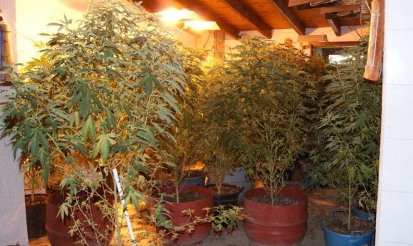 Sequestrate piantagioni di cannabis a Mazara e C/bello arrestati madre e figlio, originari di...