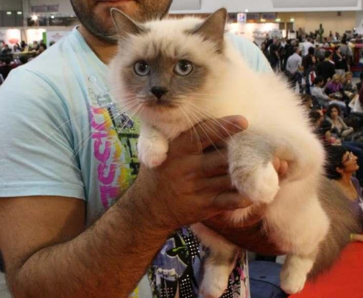 A Roma i gatti più belli di tutte le razze fino al 20 novembre