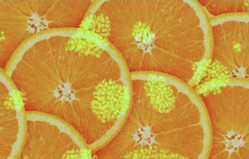 Vitamine e aminoacidi. Svelato il loro ruolo nelle cellule staminali