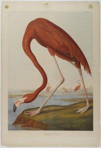 Audubon beffò il naturalista Rafinesque, inventò i topi selvatici