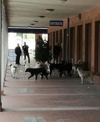 Ancora cani randagi ad Enna bassa