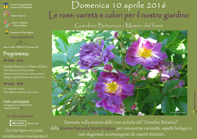 Museo del fiore presenta al giardino botanico le rose: varietà e colori per il nostro giardino