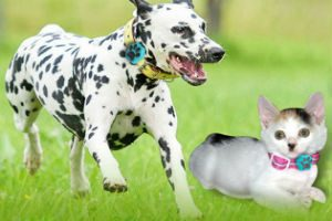 Al comune di Enna satellitare per cani femmine per monitorare randagi!