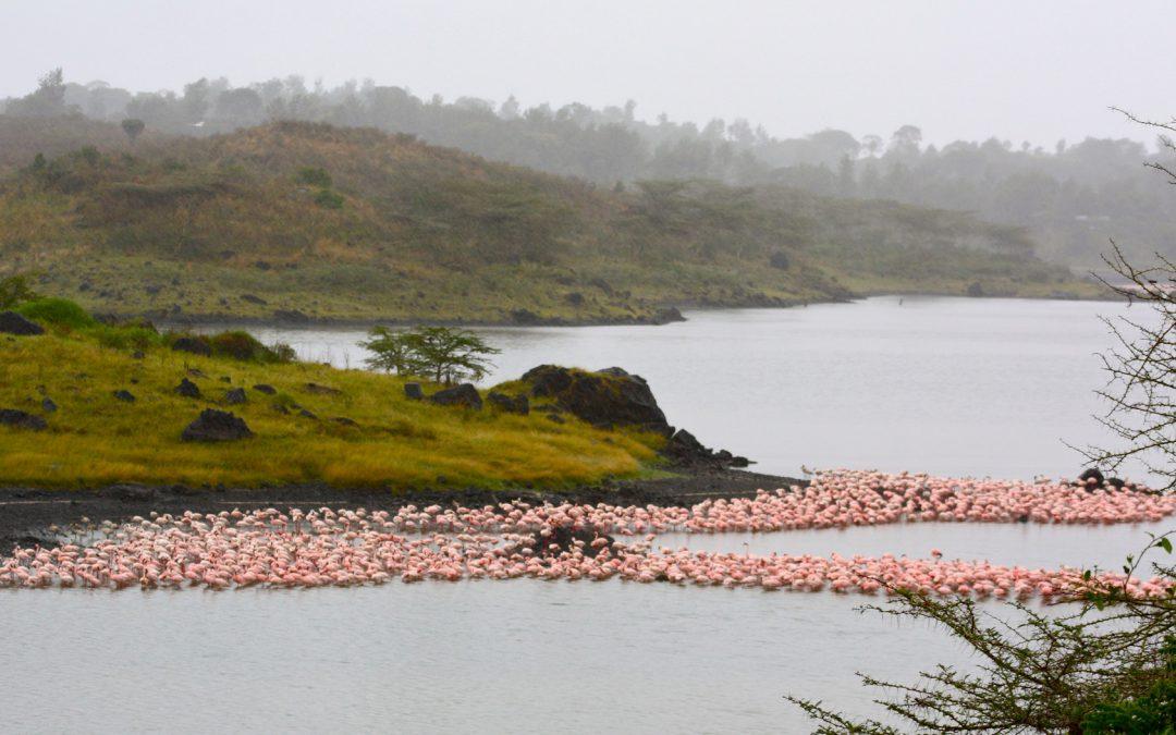 Parco Nazionale di Arusha e il vulcano spento Ngurdoto