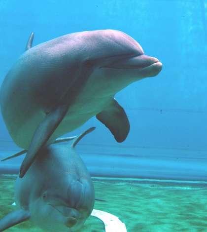 I delfini parlano, presto potremo capirli e comunicarci