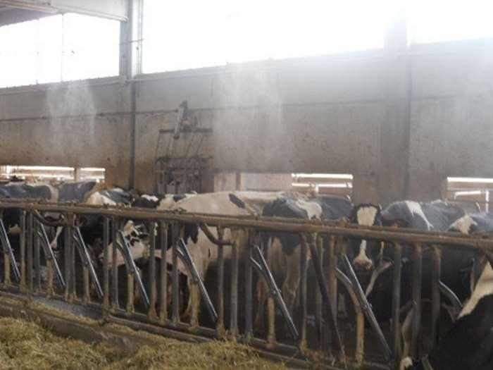 Coldiretti, emergenza caldo anche per gli animali e, di conseguenza, per gli allevatori