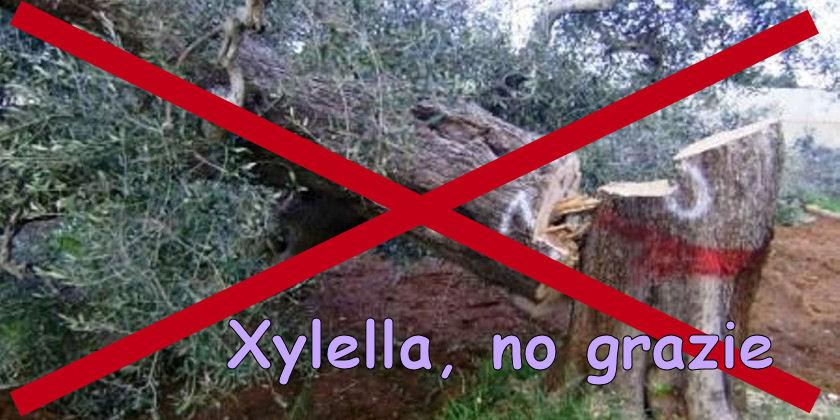 Xylella: la #Puglia deve pagare gli errori dell'#UE